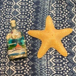 Real Starfish and shells! 🌊🏝